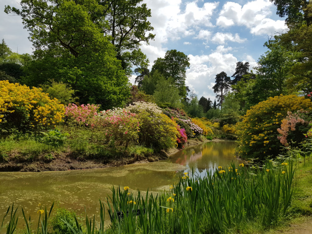 Trees and small lake at Leonardslee Gardens in Sussex